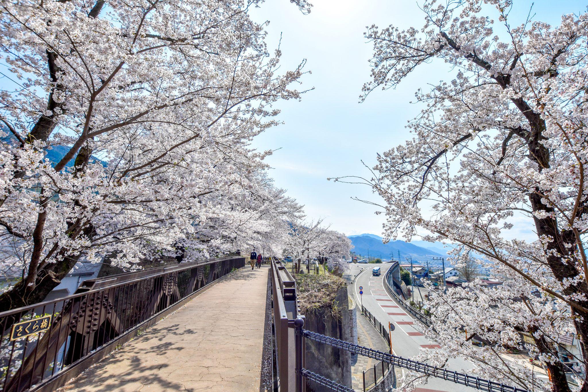 かつぬまぶどう郷駅 甚六桜 写真5