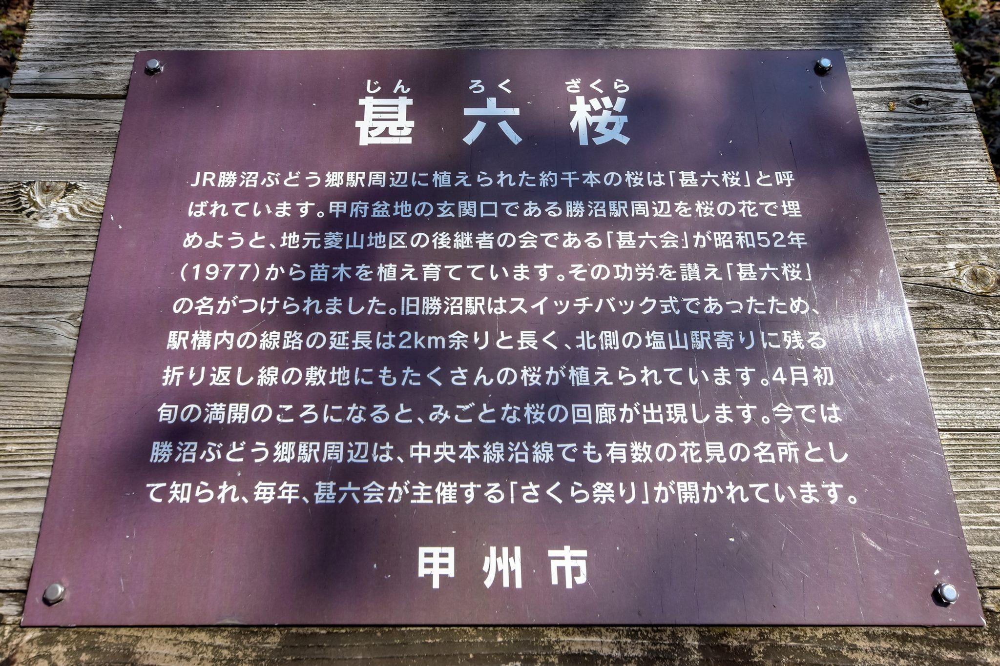 かつぬまぶどう郷駅 甚六桜 写真8