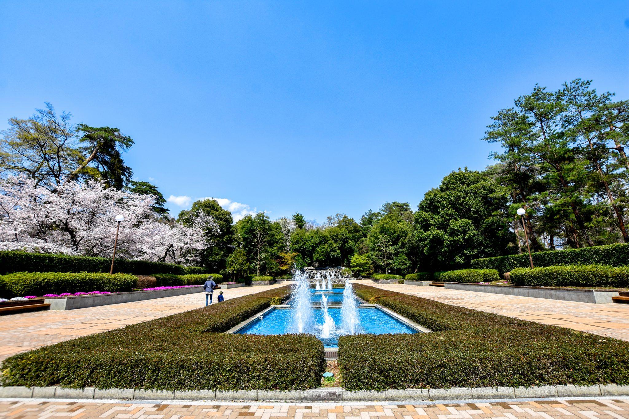 万力公園の桜 写真2