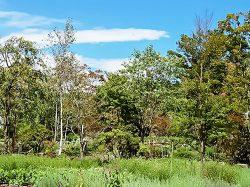 ハーブ庭園旅日記 富士河口湖庭園 富士河口湖町 テーマパーク