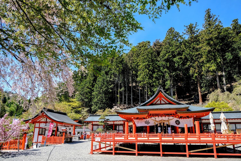 金櫻神社の桜 写真1