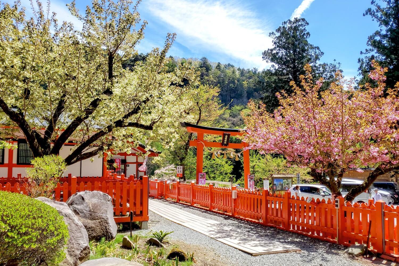金櫻神社の桜 写真2