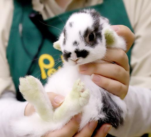 ミニウサギの写真