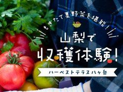ハーベストテラス八ヶ岳で収穫体験~山梨の夏野菜を味わう〜