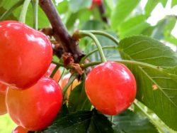 果物農家 白山園 甲州市4