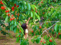 果物農家 白山園 甲州市3