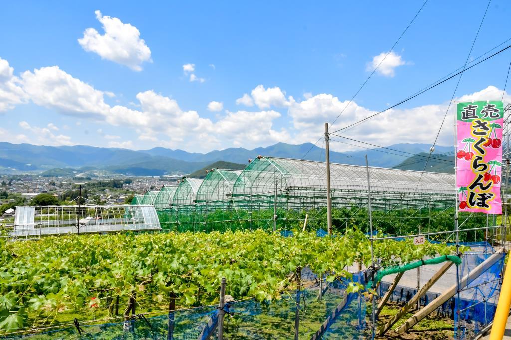 ピュアフルーツ 内田屋 塩山4