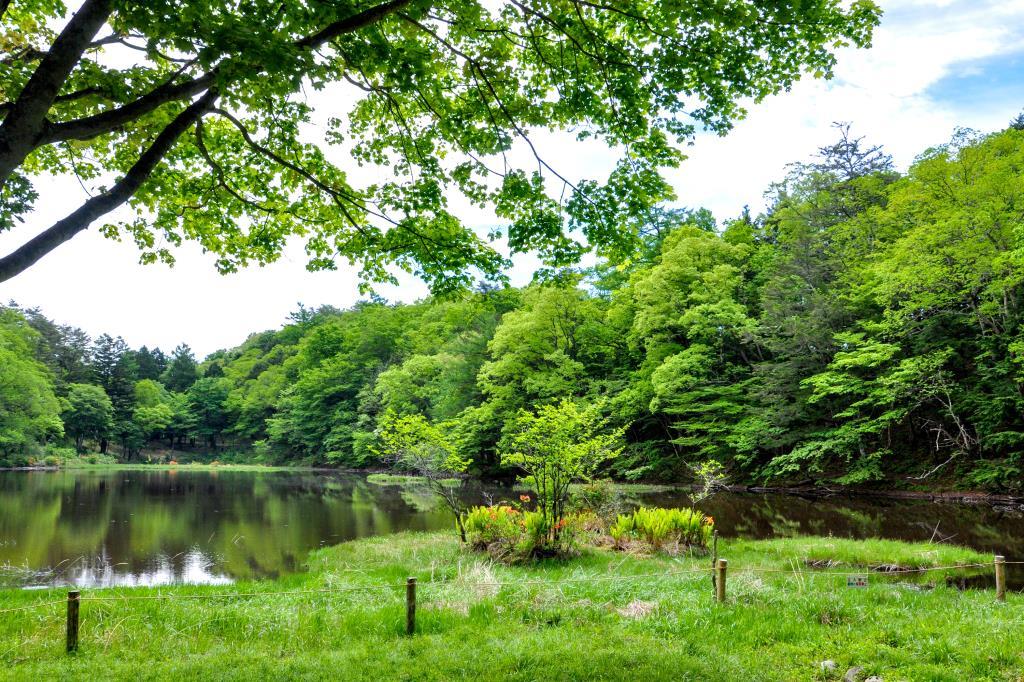 白鳳荘・さわら池キャンプ場 韮崎2