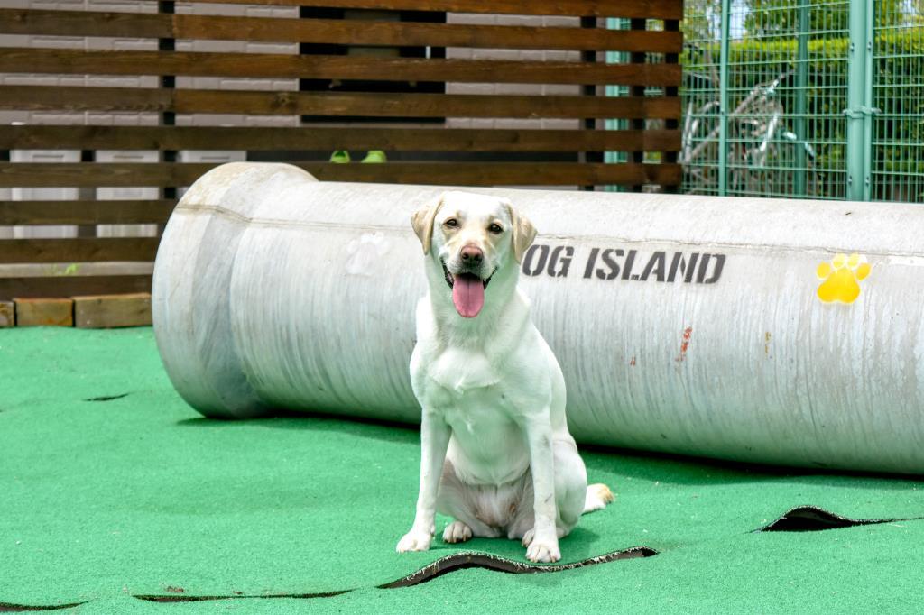 DOG Island 昭和町 ペット