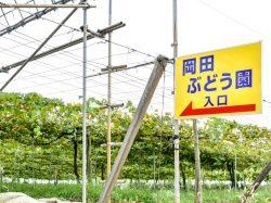 岡田ぶどう園